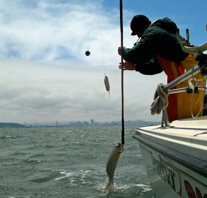 Capt. Jay Lopes of Right Hook Sportfishing sticks a halibut in San Francisco Bay
