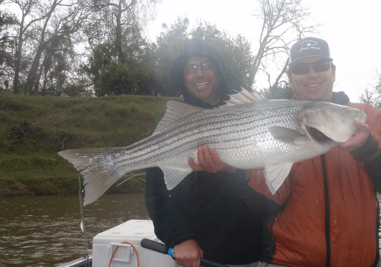 Stripers of this size are a blast on light gear!