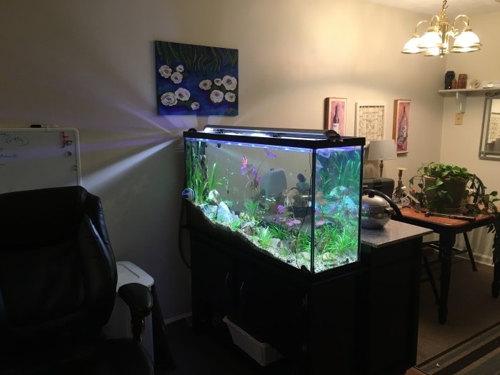 roomdividertank2