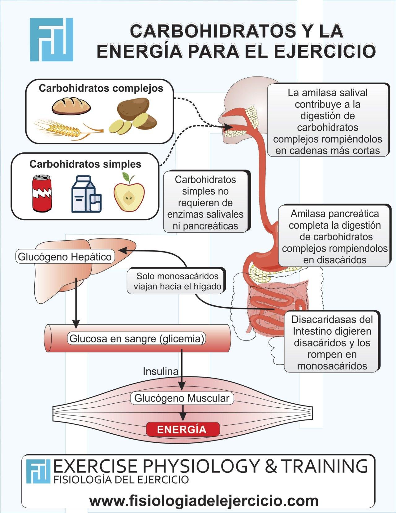 Carbohidratos y la Energía para el Ejercicio