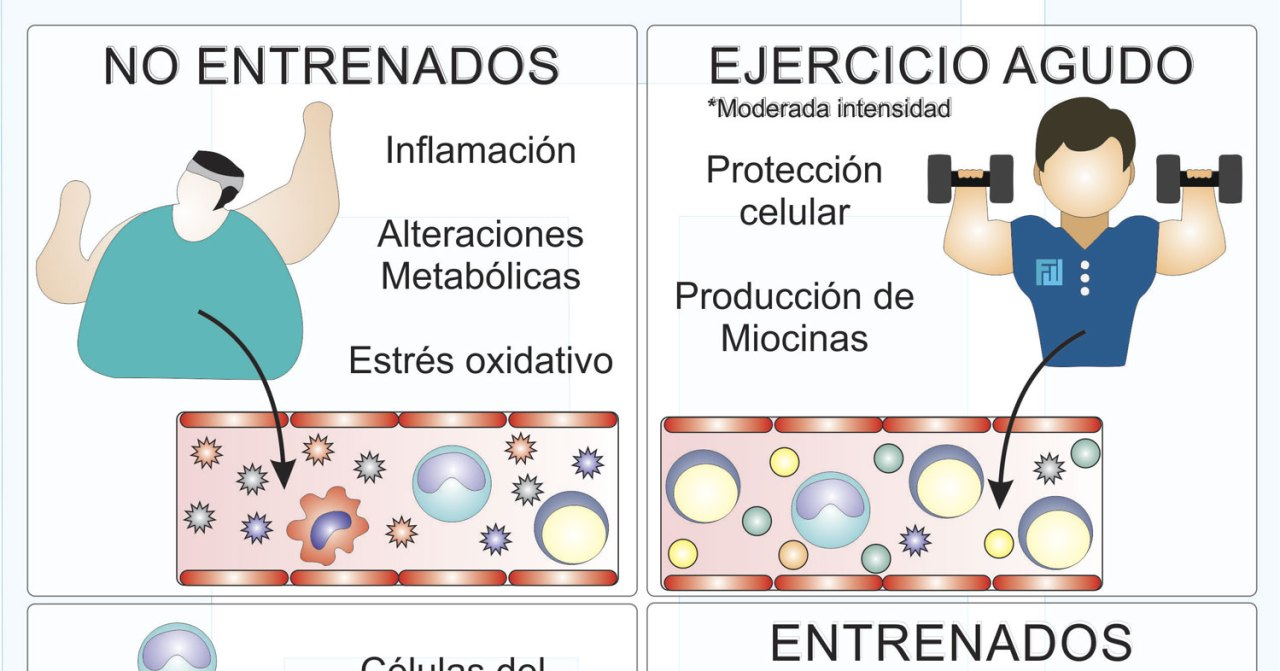 Respuestas del sistema inmune al ejercicio físico