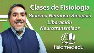 Sinapsis: liberación de neurotransmisor