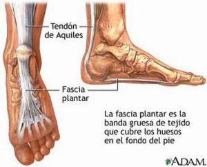anatomia fascia plantar