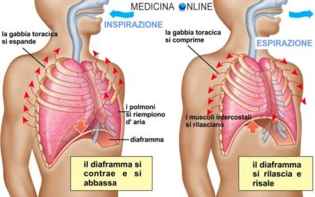 medicina-online-respirazione-diaframma-funzioni-esame-obiettivo-anamnesi-visita-medica-generale-auscultazione-ispezione-percussione-p