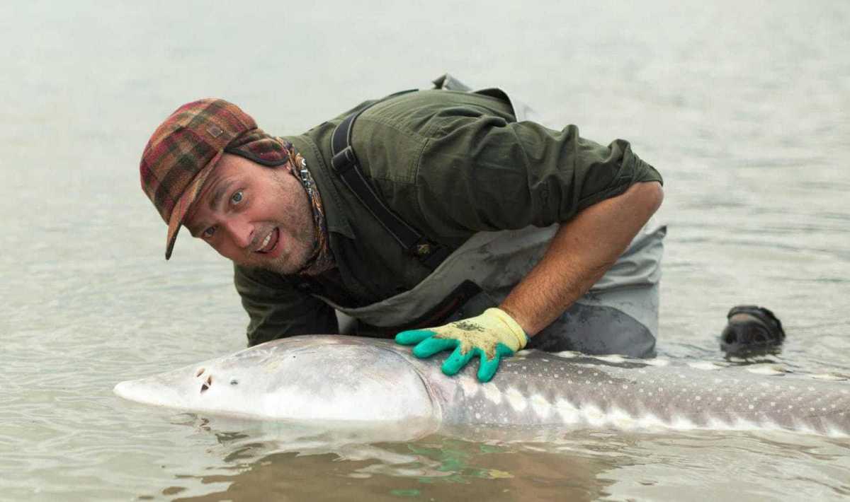 Fiskerejser Stolle med Stør fra Fraser River