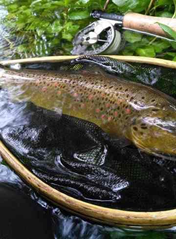 Fiskerejse-til-Ribnick-efter-bækørred-og-stalling