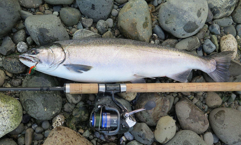 Fiskerejse-til-Vancouver-Island-efter-sølvlaks---sølvblank-laks