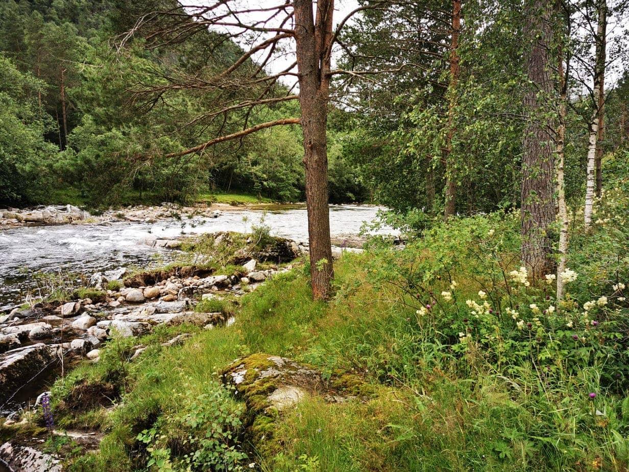 Todalselven i Norge med fiske-eventyr (20)