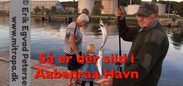 – Så hugger silden på molen – se video…