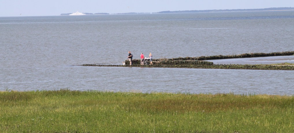 Vadehavet er en del af Danmarks nye Naturkanon