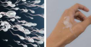 Sperm are tadpole-shaped, microscopic cells that are part of semen.