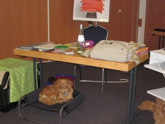 Schulhundkonferenz 2013