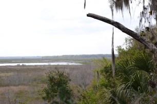 More wetlands.