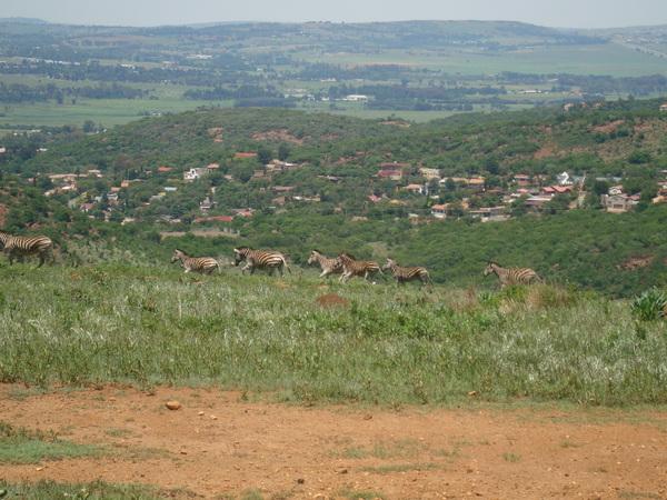 Hiking Klipriviersberg Johannesburg-11