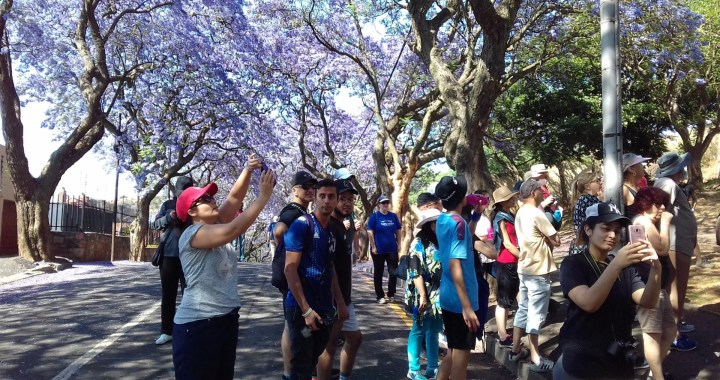 The Kensington Jacaranda Walk 2019