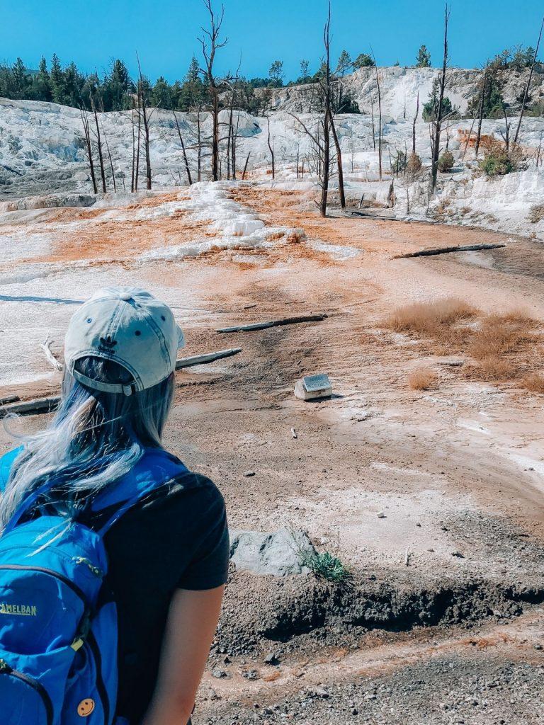 yellowstone national park mammoth hot spring