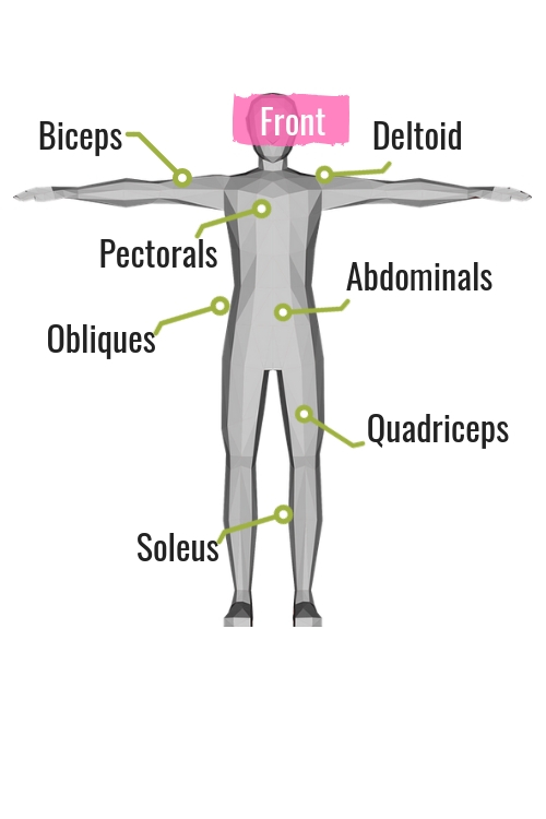 diagram of muscle on the front of the body