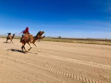 , Bedourie Camel and Pig Races 2019, Fit Average Jo