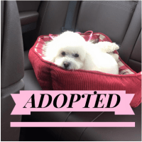Foster Dog - Reagan - Adopted