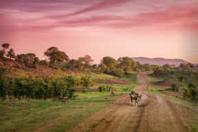 African landscape with wild dogs