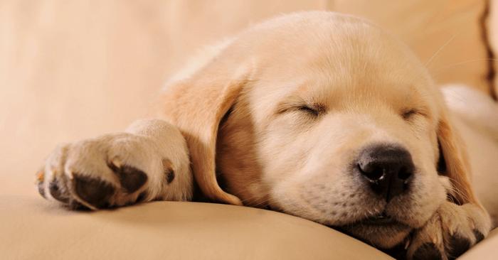 sleep loss causing weight gain