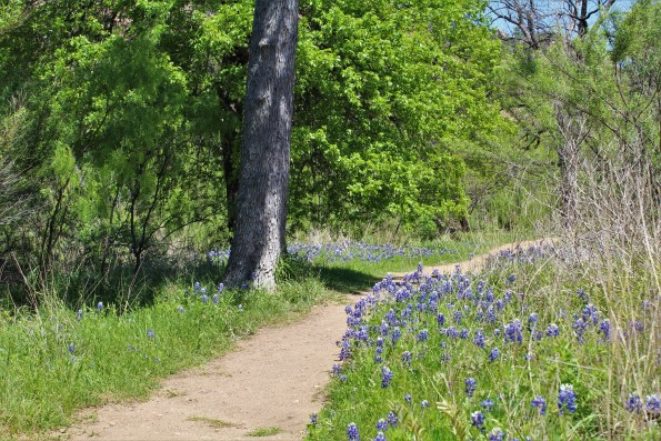 Bluebonnets on the Enchanted Rock Trail