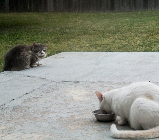 Real Life Neko Atsume - Tubbs and Fifi