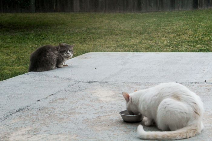 Real Life Neko Atsume - Tubbs and Fifi