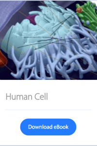 Human Cell Anatomy