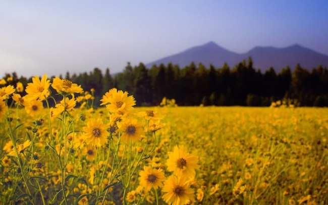 Allergie fiori