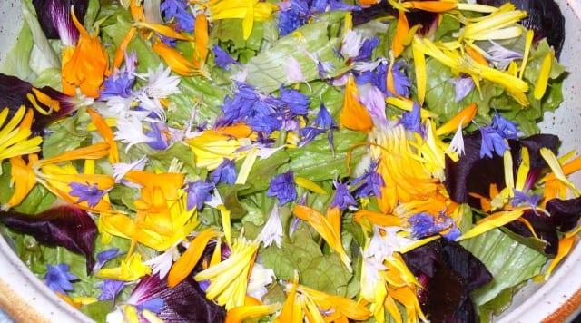Fiori eduli - Insalata fiorita
