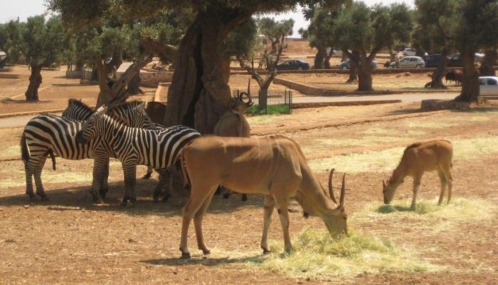 zoo-safari