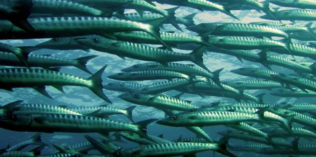 dieta paleo pesce