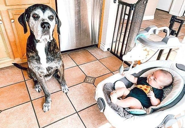 Bella dog and Baby boy