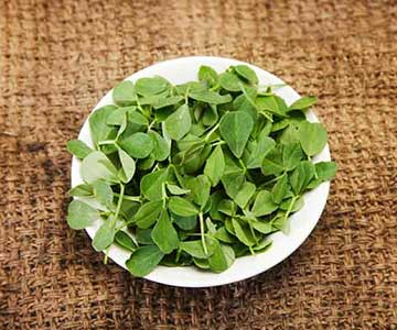 Fenugreek Herb As Appetite Suppresant