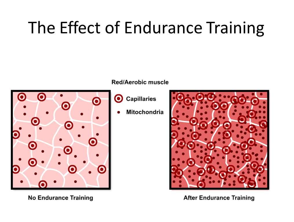 Endurance Effect