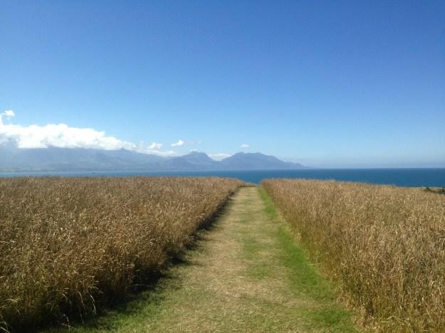 Kaikoura Peninsula Walk
