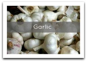 garlictoday