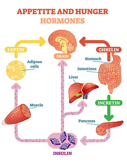 Hunger Hormones increasing appetite