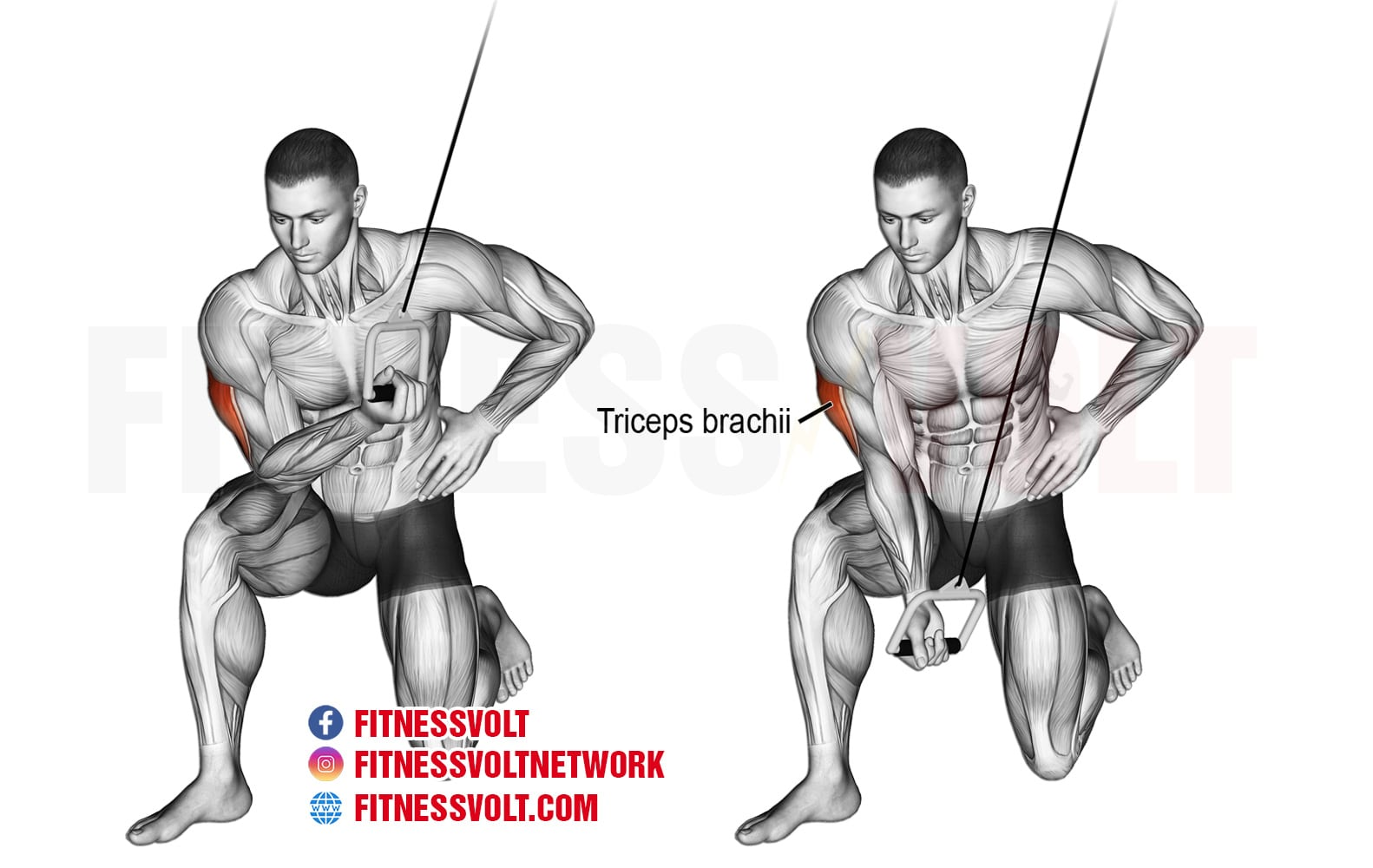 Cable Concentration Tricep Extension Triceps
