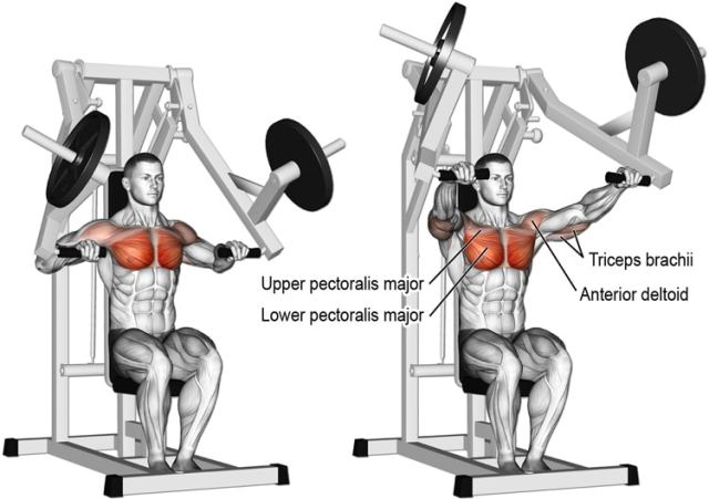 Machine Chest Press Exercise