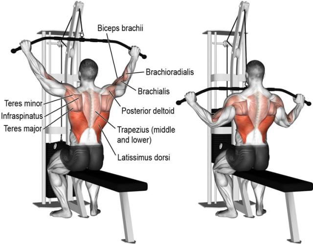 Wide Grip Pulldowns Exercise