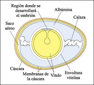 bondades de la albumina