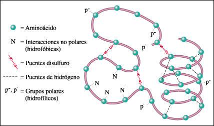 Interacciones Proteína