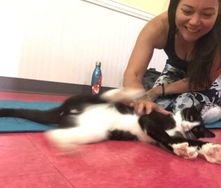 Playing with a cat during cat yoga.