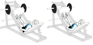 Calf press 5 Best Exercises for Calf Muscles Fitsaurus