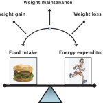 Weight Loss Theory Debunked – Calories In Vs. Calories Out