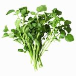 The Food That Could Help You Recover From Exercise Faster – Watercress