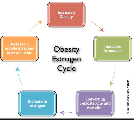 estrogen and weight gain