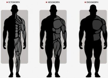 3-Different-Body-Types